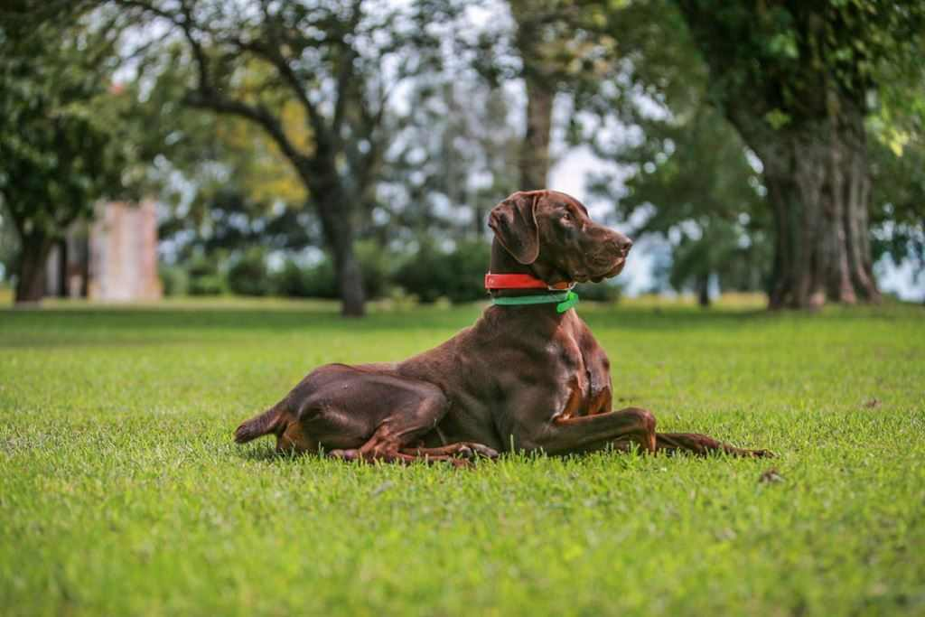 The Best Dogs for partridge Hunting